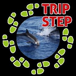 Eolie delfini tra Panarea e Stromboli foto di: Ghost in the Shell via Wikimedia Commons