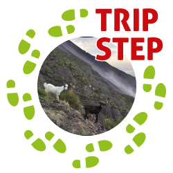 Eolie Stromboli capre in prossimità della sciara del fuoco foto di: stefan fotos via Wikimedia Commons