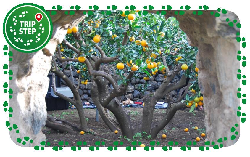Pantelleria giardino pantesco foto di: fab. via Wikimedia Commons