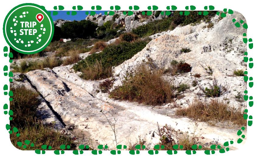 Plemmirio carraia greca foto di Codas2 via Wikimedia Commons