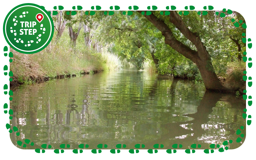 Riserva naturale Fiume Ciane e Saline di Siracusa foto di: Gio la Gamb via Wikimedia Commons