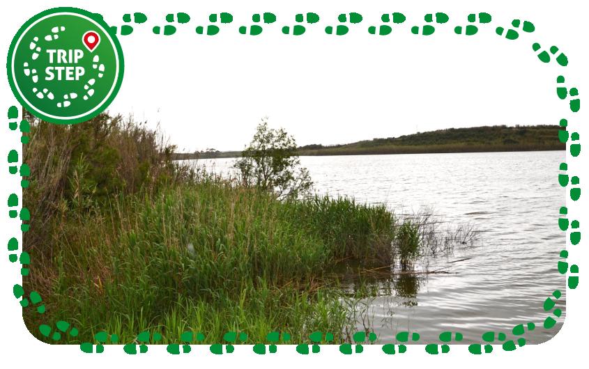 Biviere di Gela vista del lago foto di lore5711 via TripAdvisor