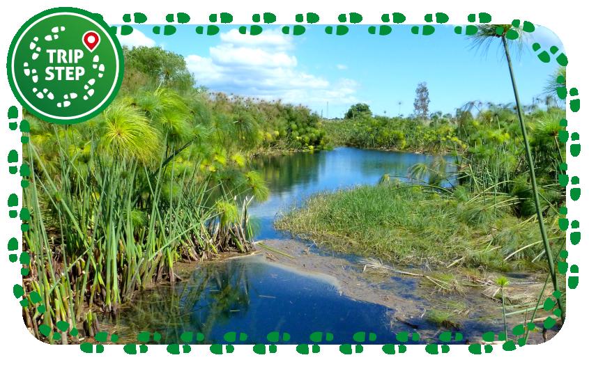 Riserva naturale Fiume Ciane e Saline di Siracusa papireto foto di: Marchal via Wikimedia Commons